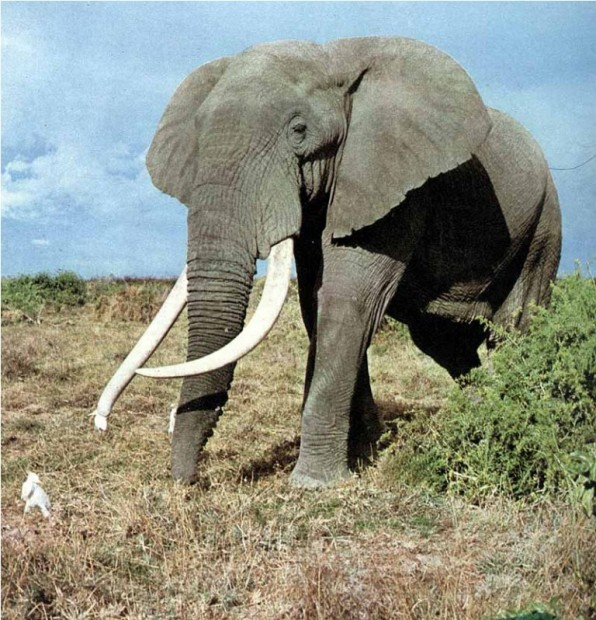 Сексуальный гороскоп слон
